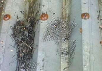 樋の掃除ゴミ